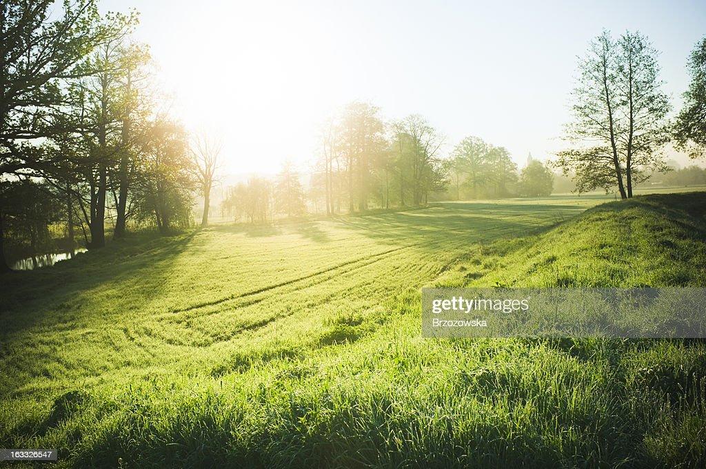 Beautiful nature : Stock Photo