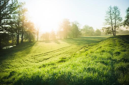 Beautiful nature 163326547