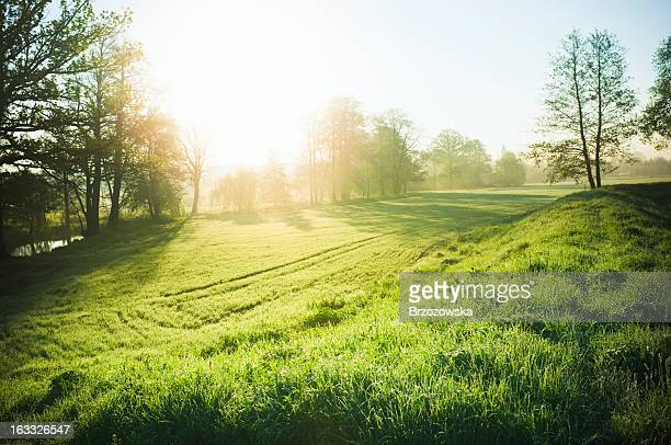 beautiful nature - sunny stock pictures, royalty-free photos & images