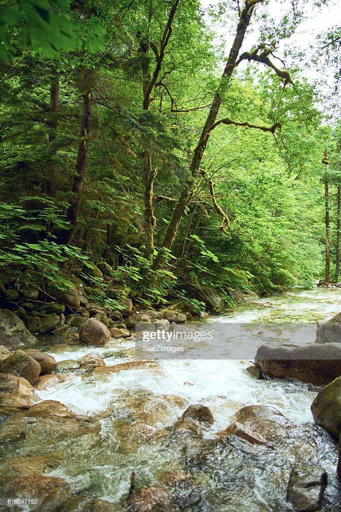 Beautiful nature with mountain : Foto de stock