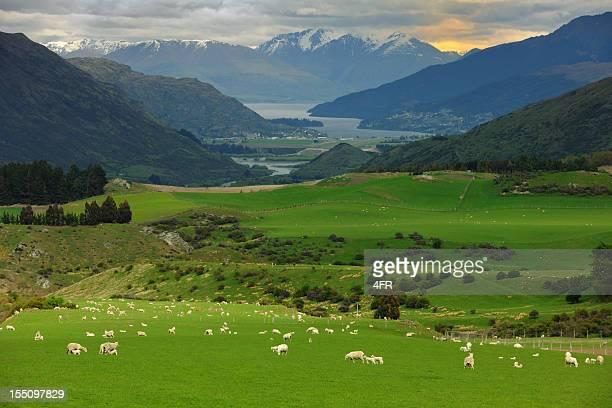 Wunderschöne Neuseeland (XXXL