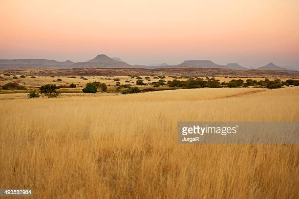 beautiful northern namibian savannah landscape at sunset - afrika stockfoto's en -beelden