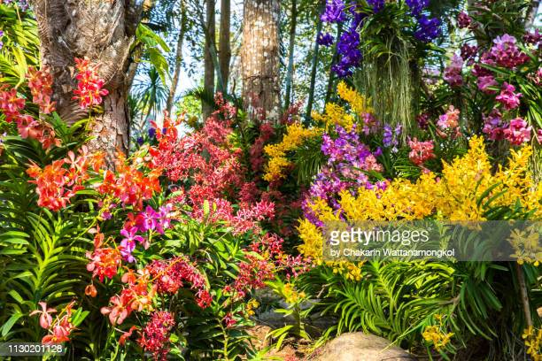 beautiful orchid garden, chanthaburi. - orchid flower stock pictures, royalty-free photos & images