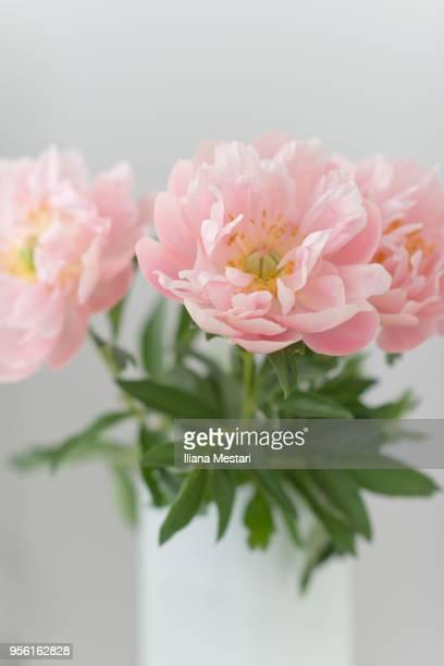 Beautiful pale pink peony bouquet