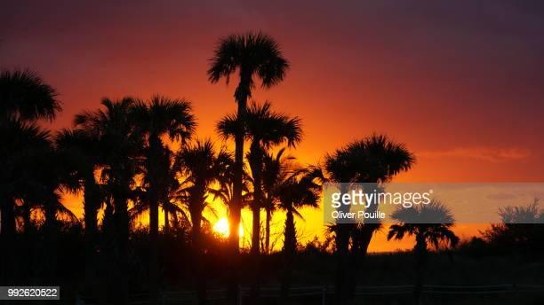 Beautiful Palm Tree Sunrise
