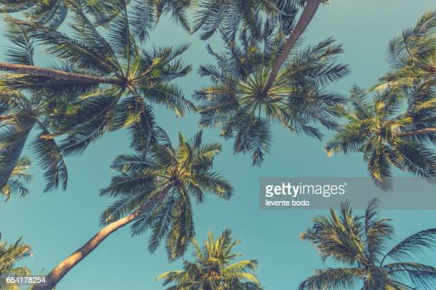 Beautiful palm trees and beach sand with beautiful blue sea and blue sky. Summer mood sun beach background concept.
