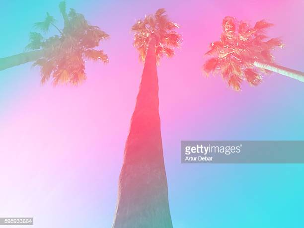 Beautiful palm trees taken from below with the sky on summer with psychedelic and retro colors.
