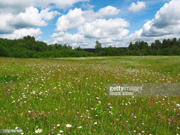 beautiful panoramic view with spring flowers meadow and shining sun. rural summer concept. - meadow stock pictures, royalty-free photos & images