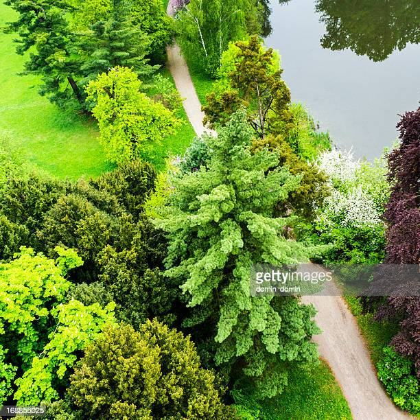 Beautiful park with trees, grass, garden path, pond, aerial view