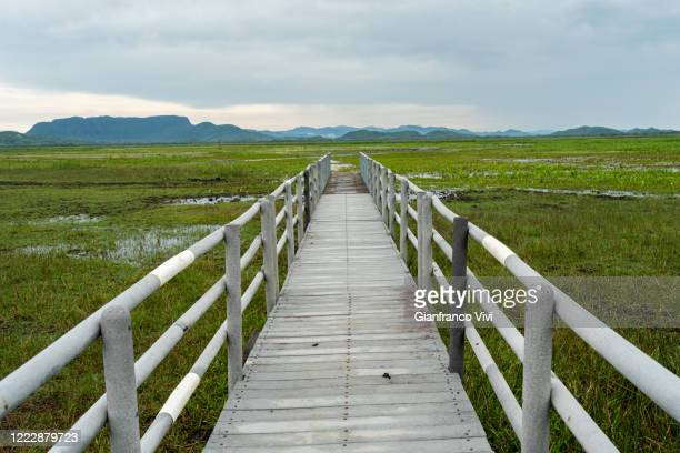 beautiful pier of palo verde national park in costa rica - guanacaste stock pictures, royalty-free photos & images