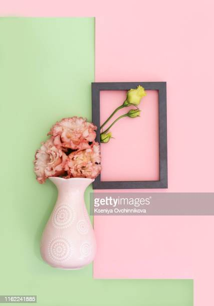 beautiful pink flowers on white pink background with frame, eustoma - studio shot stock-fotos und bilder