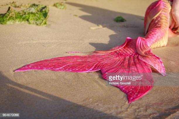 beautiful pink mermaids tail on the beach. mettam's pool, north beach - western australian beach. - mermaid stock photos and pictures