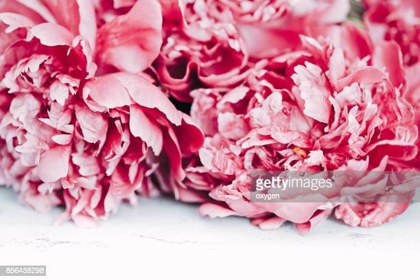 Beautiful pink peony flowers on white table