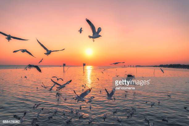 Beautiful Pink Twilight at the sea with many seagull