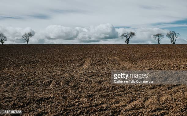 beautiful ploughed field and skyscape - tree stock pictures, royalty-free photos & images