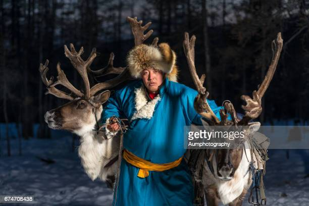 Beautiful portrait of Mongolian Reindeer in traditionally Tsaatan family on their reindeers, Mongolia