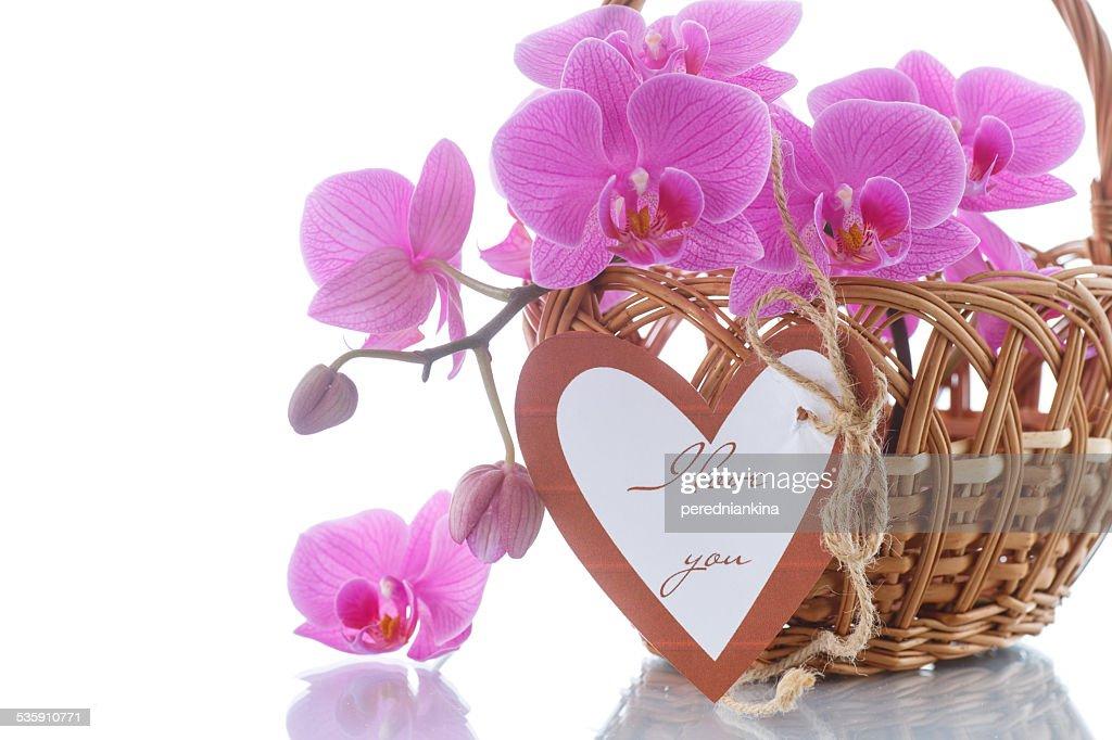 Bela roxo phalaenopsis Flores : Foto de stock