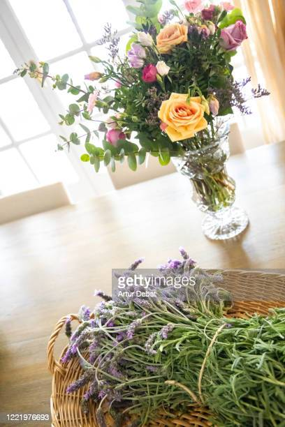 beautiful purple roses with lavender at home. - roses catalonia stock pictures, royalty-free photos & images