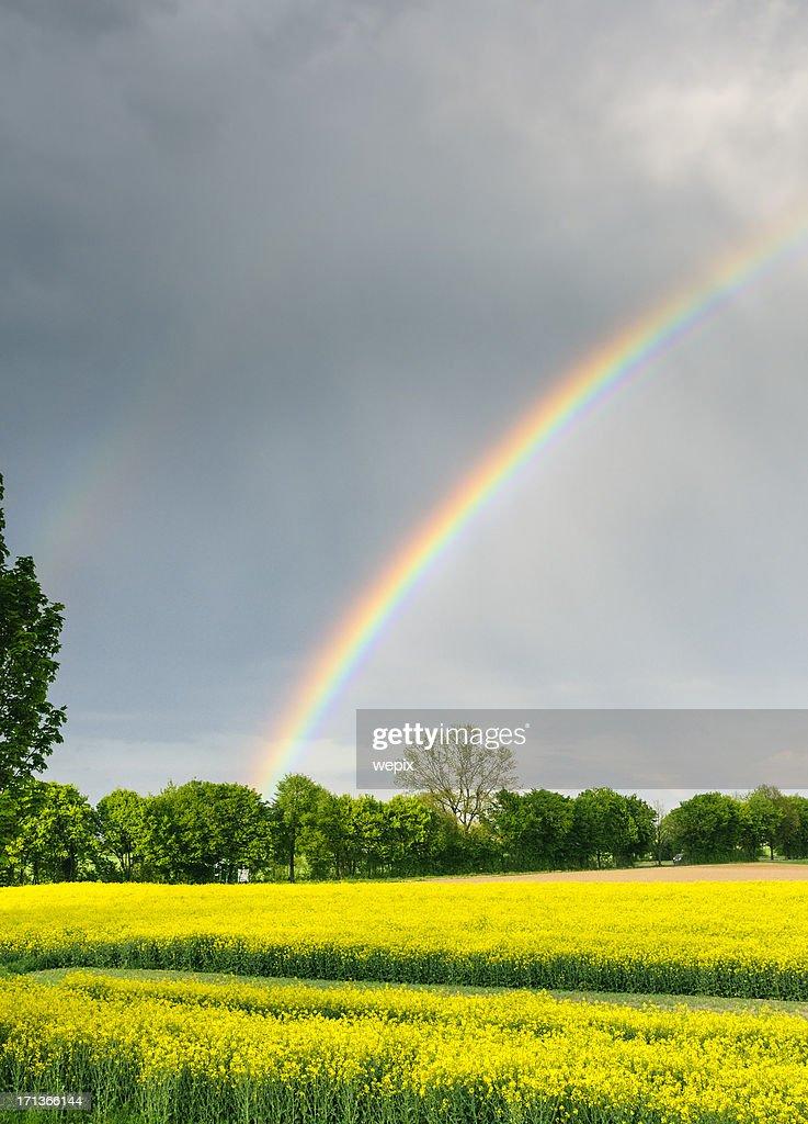 美しいレインボー明るいイエロー菜種雨の空の風景 : ストックフォト