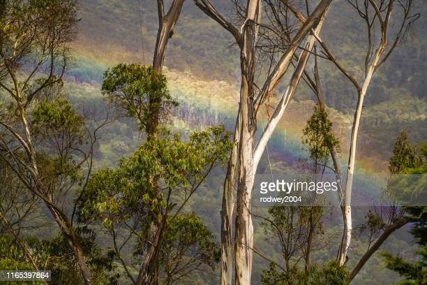 a beautiful rainbow in cundinamarca, colombia. - cundinamarca stock pictures, royalty-free photos & images