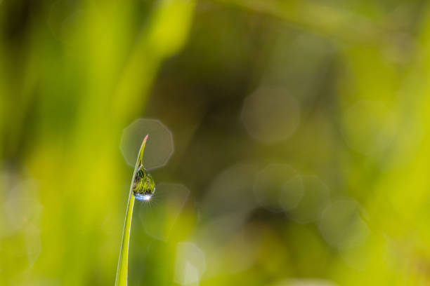 Beautiful Raindrop On Grass With Sun Star Sparkling In The Morning