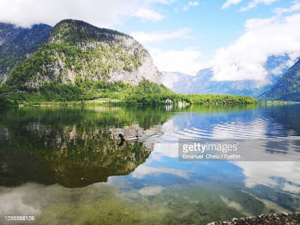 beautiful reflection. duck disturbing reflection - upper austria stock pictures, royalty-free photos & images