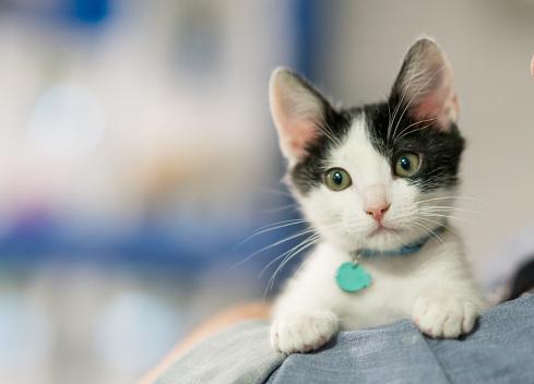 Beautiful rescued kitten 979195892