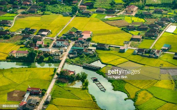 beautiful rice field in tu le, mu cang chai, yen bai viet nam - son la stock pictures, royalty-free photos & images