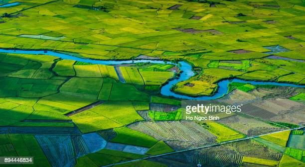 beautiful rice field in tu le, mu cang chai, yen bai viet nam - son la province stock pictures, royalty-free photos & images