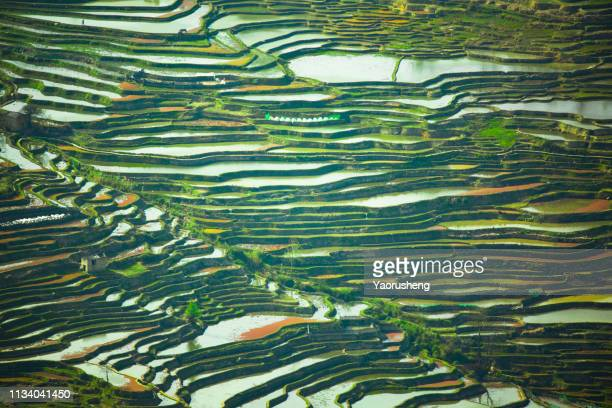 beautiful rice terraces of yuanyang in spring season, yunnan, china - yuanyang stock pictures, royalty-free photos & images
