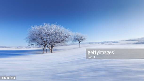 beautiful rime on snowfield in inner mongolia - snowfield stock pictures, royalty-free photos & images