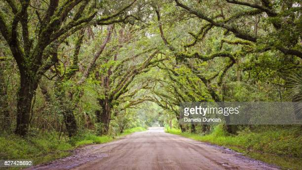 beautiful road - live oak tree stock pictures, royalty-free photos & images