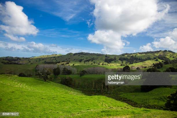 beautiful rolling landscape in new zealand - northland new zealand stock pictures, royalty-free photos & images