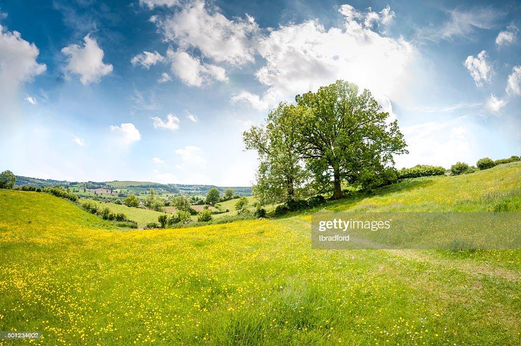 美しいローリング風景をサマーズ Cotswolds 一日の終わりには、 : ストックフォト