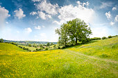 Beautiful Rolling Landscape On A Summers Day In The Cotswolds