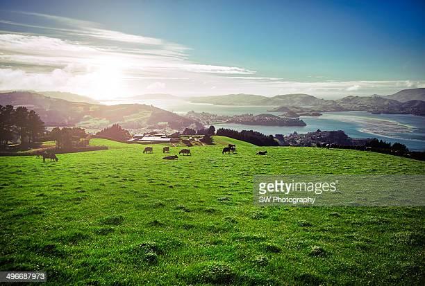 A beautiful rural field in New Zealand