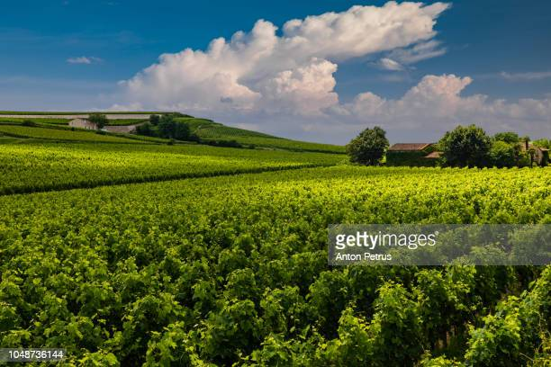 Beautiful rural view with vineyards and clouds in Bordeaux, France