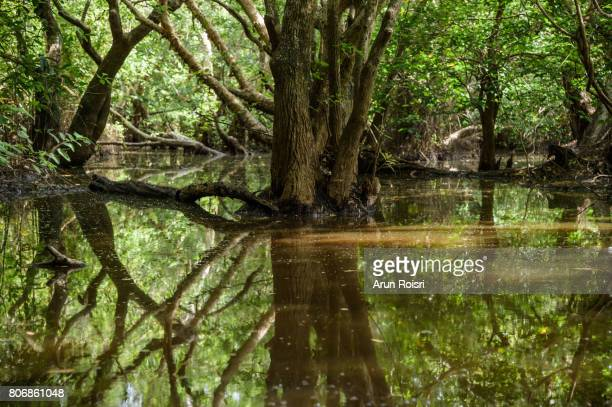 Beautiful scene of the swamp forest Landscape, Songkhla Lake, Thailand