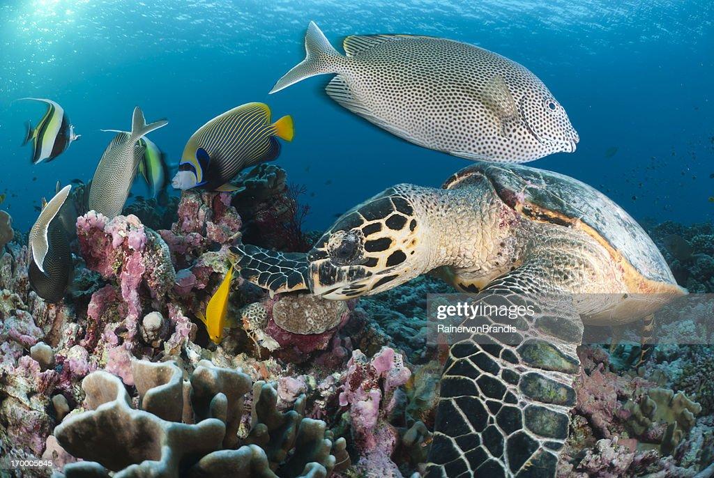 beautiful scene on coral reef : Stock Photo