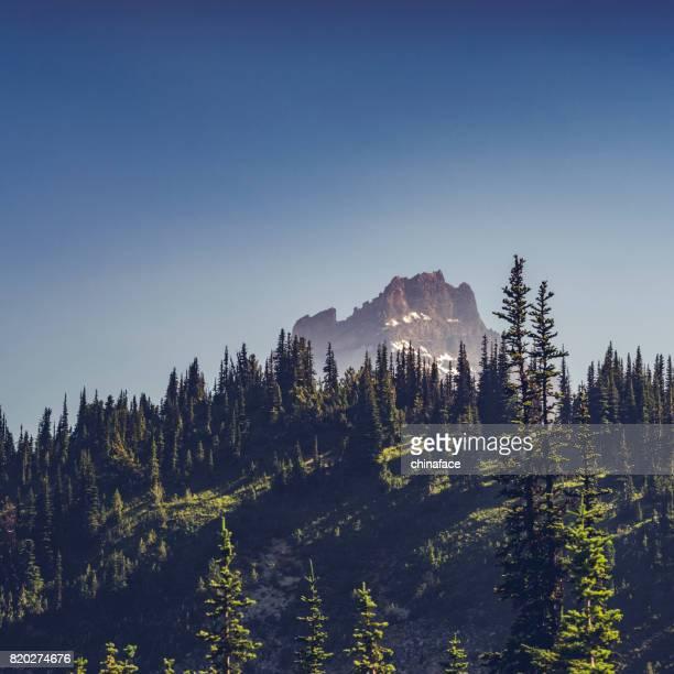beaux paysages du Parc National du Mont Rainier