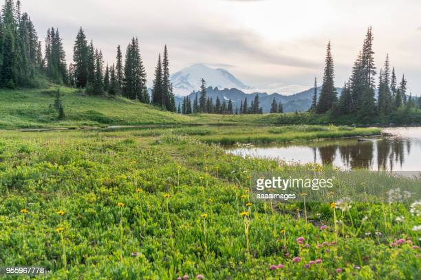 beautiful scenery of mt. rainier national park - cascade range stock pictures, royalty-free photos & images