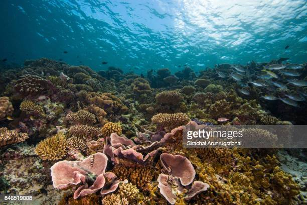 Beautiful scenery of shallow reefs with school of fishes