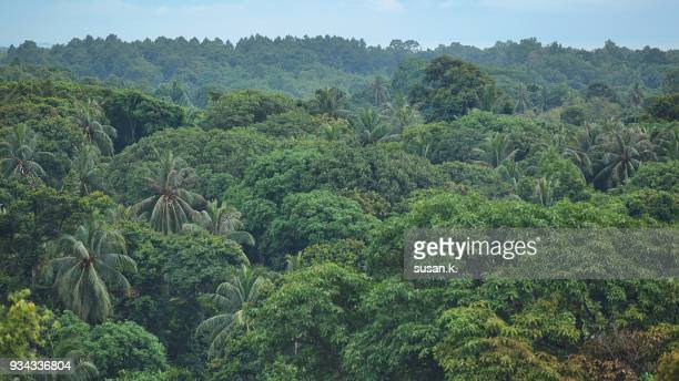 beautiful scenery of tropical rainforest - canopy stock pictures, royalty-free photos & images