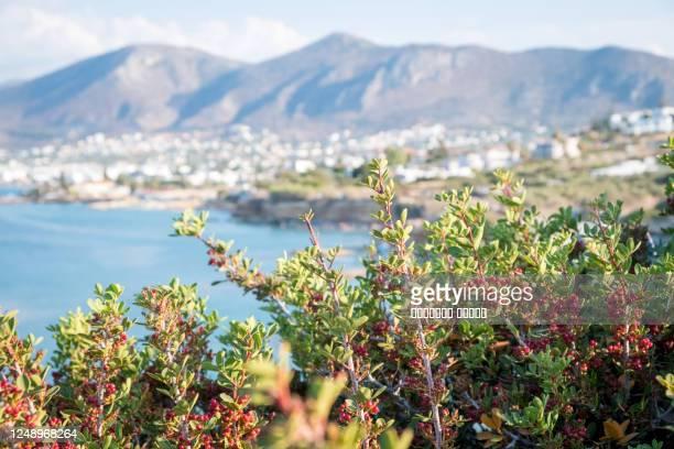beautiful sea in hersonissos on crete. greece - hersonissos photos et images de collection