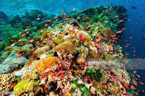 beautiful seascape, outstanding diversity, fish paradise of indonesian coral reef - indo pacific ocean stock pictures, royalty-free photos & images