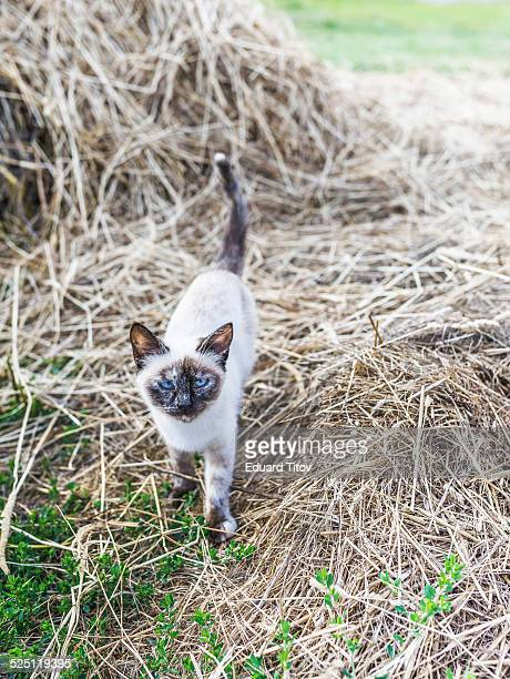 beautiful small kitten - utc−10:00 stock pictures, royalty-free photos & images