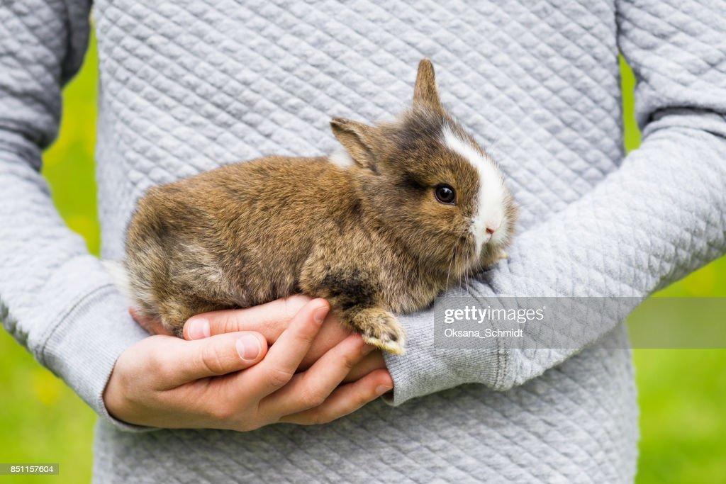 Beautiful small rabbit bunny in girls hands. : Stock Photo