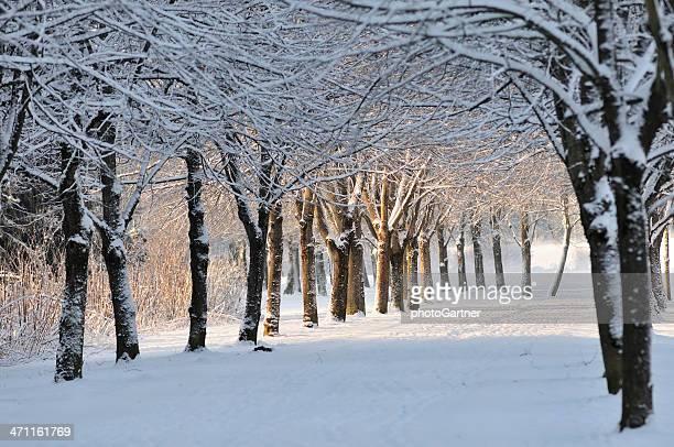 Wunderschöne verschneiten park