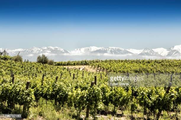 magnifique vignoble sud-américain à tupungato, mendoza, argentine. - argentine photos et images de collection