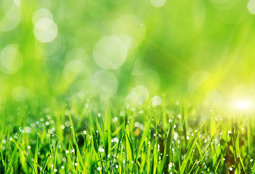 Beautiful spring field with a green grass 927517158